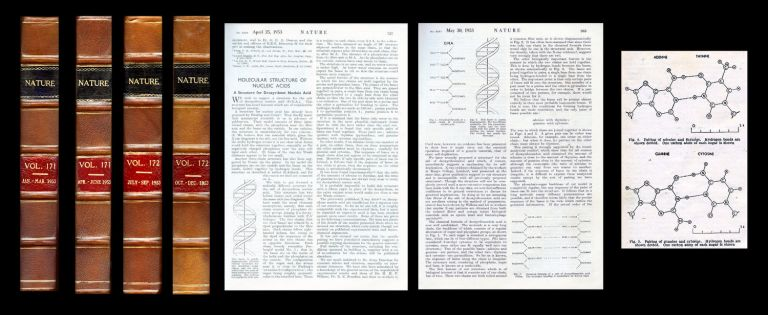 IN 4 FULL VOLUMES, ALL 6 MILESTONE PAPERS ANNOUNCING THE DISCOVERY OF THE STRUCTURE OF DNA: Molecular Structure of Nucleic Acids: A Structure for Deoxyribose Nucleic Acid, in Nature Vol.171, No. 4356, pp.737-738, 25th April, 1953 [WITH] Wilkins, Maurice H.F., A.R. Stokes and H.R. Wilson. Molecular Structure of Deoxypentose Nucleic Acids, in Nature Vol.171, No. 4356, pp.738-740, 25th April, 1953 [WITH] Franklin (Rosalind E.) and R.G. Gosling. Molecular Configuration in Sodium Thymonucleate, in Nature Vol.171, No. 4356, pp.740-741, 25th April, 1953 [WITH] Watson (James D.) & Francis Crick. Genetic Implications of the Structure of Deoxyribonucleic Acid, in Nature Vol.171, No. 4361, pp.964-967, 30th May, 1953 AND Franklin, R. E.; Gosling, R. G. Evidence for 2-Chain Helix in Crystalline Structure of Sodium Deoxyribonucleate (pp. 156-157) WITH Wilkins (M. H. F.), W. E. Seeds, A. R. Stokes and H. R. Wilson. Helical Structure of Crystalline Deoxypentose Nucleic Acid, in Nature (pp.759-762) [FIRST EDITION OF THE FIRST ANNOUNCEMENT OF THE DISCOVERY OF DNA. Includes both Volume 171 & 172. Very handsomely bound. Near fine.]. James Dewey Watson, Francis Crick.