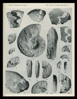 Jurassic Ammonites From Jebel Tuwaiq, Central Arabia, with R. A. Bramkamp; M. Steineke With Stratigraphical Introduction in Philosophical Transactions of the Royal Society of London, No. 633, Vol. 236, Series B, 6 March 1952
